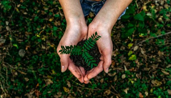 Jeune pousse de plante dans le creux de deux mains réunis